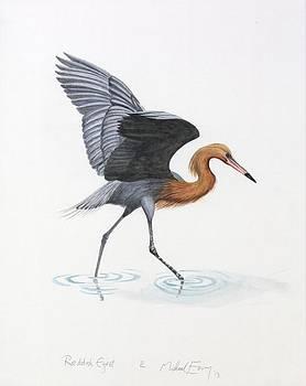 Michael Earney - Reddish Egret
