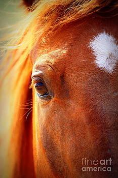 Redhead Horse by Arie Arik Chen