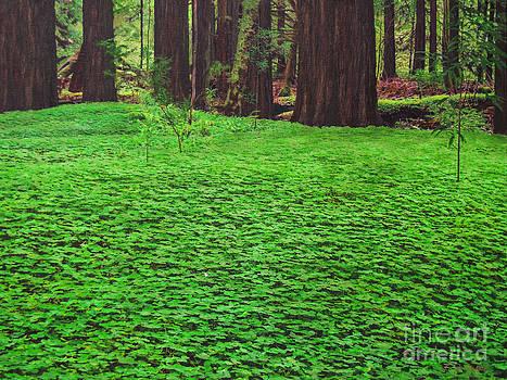 Redwood Carpet by L J Oakes
