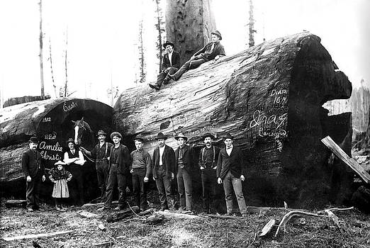 Daniel Hagerman - REDWOOD PARTY 1902