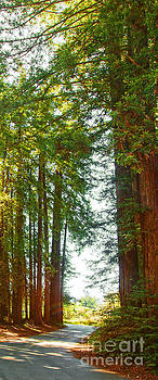 Artist and Photographer Laura Wrede - Redwood Wall Mural Panel 2
