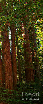 Artist and Photographer Laura Wrede - Redwood Wall Mural Panel Three