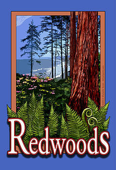 Redwoods in California by Michelle Scott