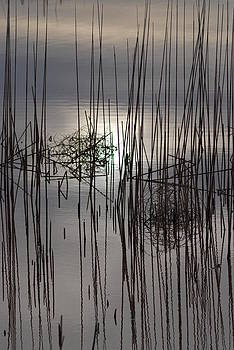 Reed Reflection 3 by T C Brown
