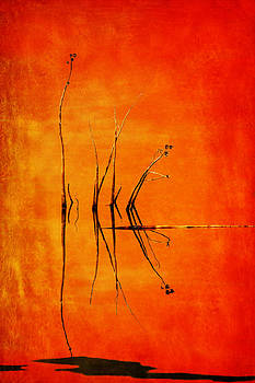 Nikolyn McDonald - Reeds and Reflection in Orange