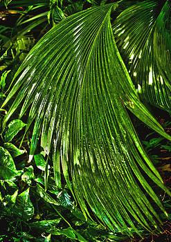 Reeds by Fred L Gardner