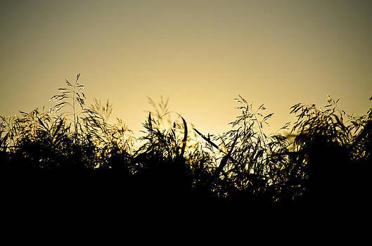 Reeds by Henrik Petersen