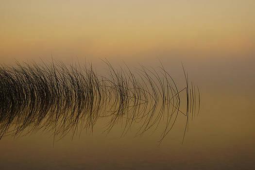 Reeds in the Fog by Jann Kline