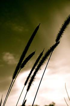 Reeds in the Wind by Shane Dickeson