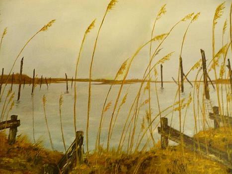 Reeds by Josh Pohlig