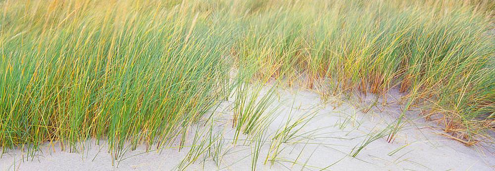 Reeds by Tony Wainwright