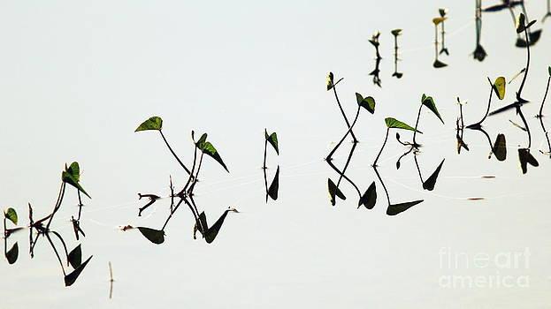 Reflect by Vishakha Bhagat