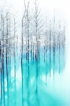 Reflected Forest by Neil Hemsley