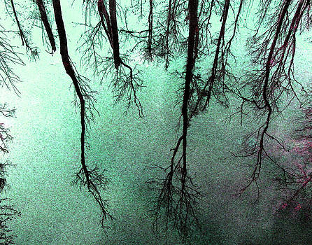 Reflected Trees by Joseph Tese