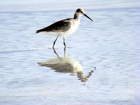 Reflected Water Bird by Eva Kato