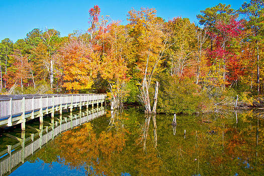Regina  Williams  - Reflecting Autumn