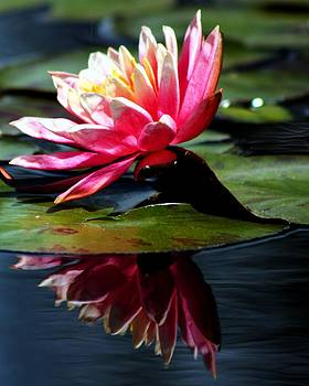 Reflecting Flower by Michael Tipton