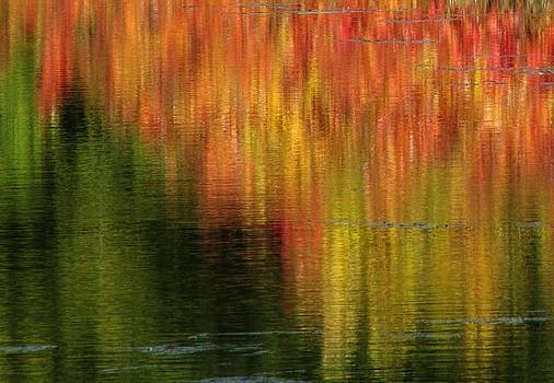 Reflecting on Autumn by Lori Frisch