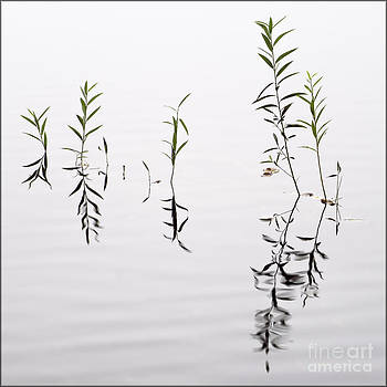 Reflecting on Reeds by George Hodlin