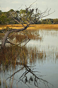Reflecting Tree in Jekyll Island Marsh 1.2 by Bruce Gourley