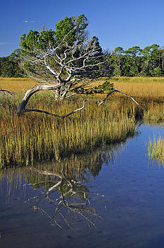 Reflecting Tree in Jekyll Island Marsh 1.3 by Bruce Gourley