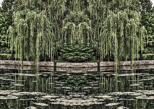 Reflecting Willows by Rebecca Hiatt