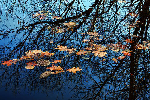 Nikolyn McDonald - Reflection and Autumn Leaves