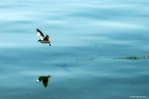 Reflection... by Lillo Bonadonna