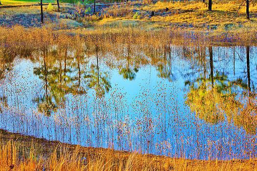 Reflection by Nelin Reisman
