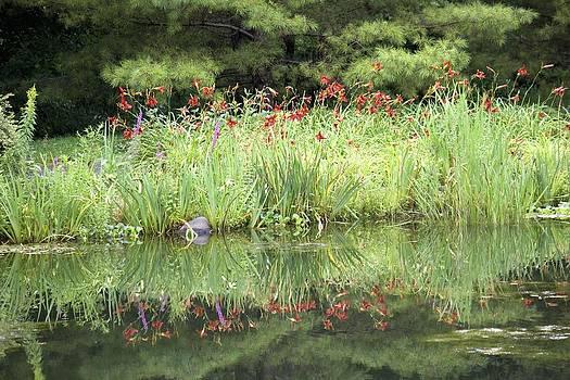 Veronica Vandenburg - Reflection of Lilies
