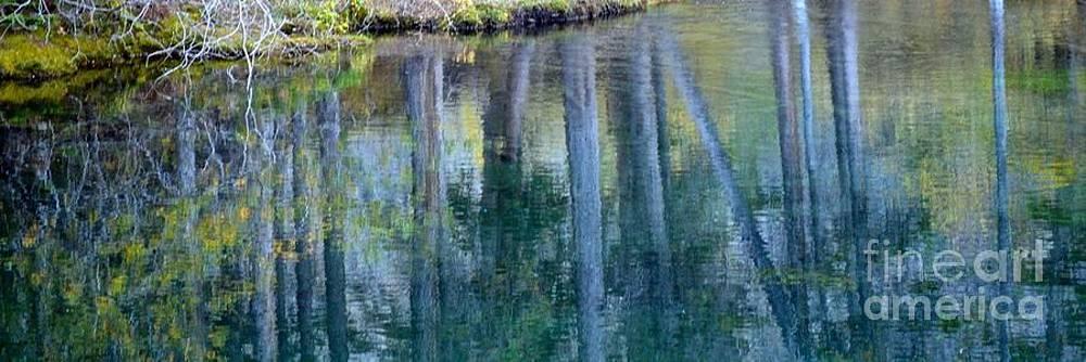 Reflection by Stephanie  Bland