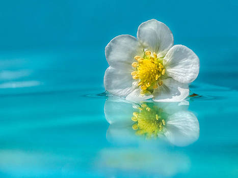 Reflection by Ursula Klepper