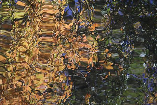 Adrienne Franklin - Reflections