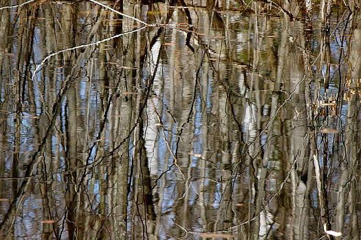 Reflections by David Pickett