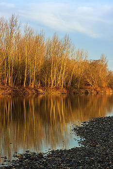 Reflections by Davorin Mance