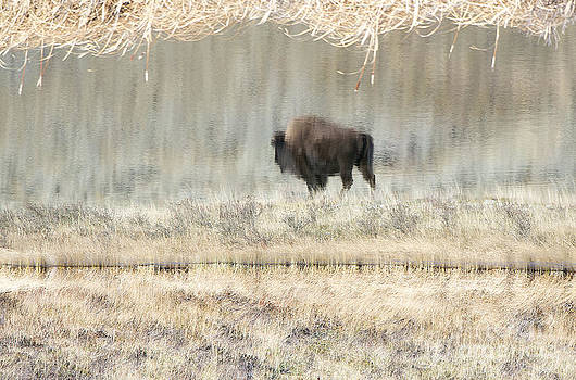 Reflections by Deby Dixon