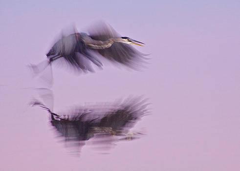 Reflections in Flight by Dan Ferrin