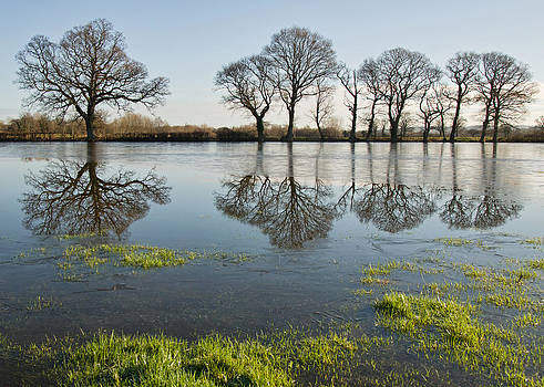 Reflections in flood water by Pete Hemington