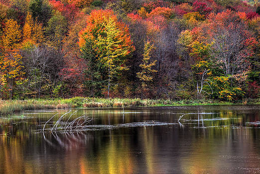 Reflections in Quaker Lake by Terry Cervi