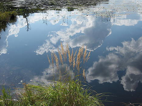 Reflections in the Water by Carolyn Reinhart
