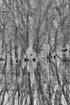 Reflections by Jana Thompson