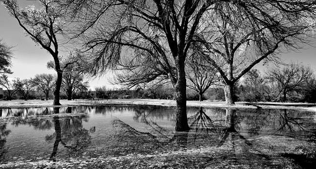 Reflections by John Dickinson