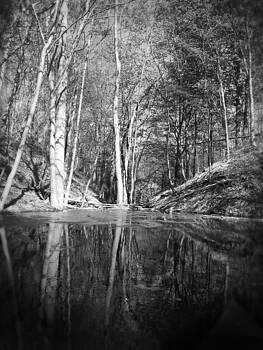 Reflections by Jonathan Westfall