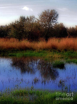 Reflections by Molly McPherson