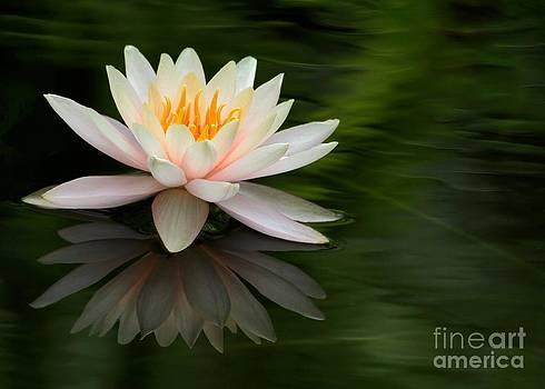 Sabrina L Ryan - Reflections of a Water Lily