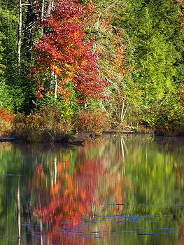 Reflections of Autumn by Lori Frisch