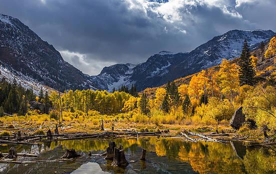 Reflections of Autumn by Tassanee Angiolillo