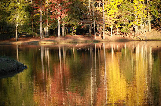 Reflections of Fall by Donna Vasquez