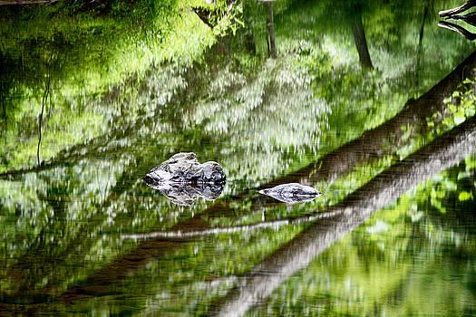 Dawn J Benko - Reflections of Van Campens Glen