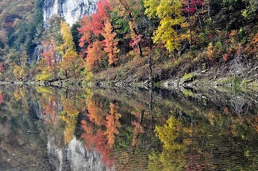 Marty Koch - Reflections on the Buffalo